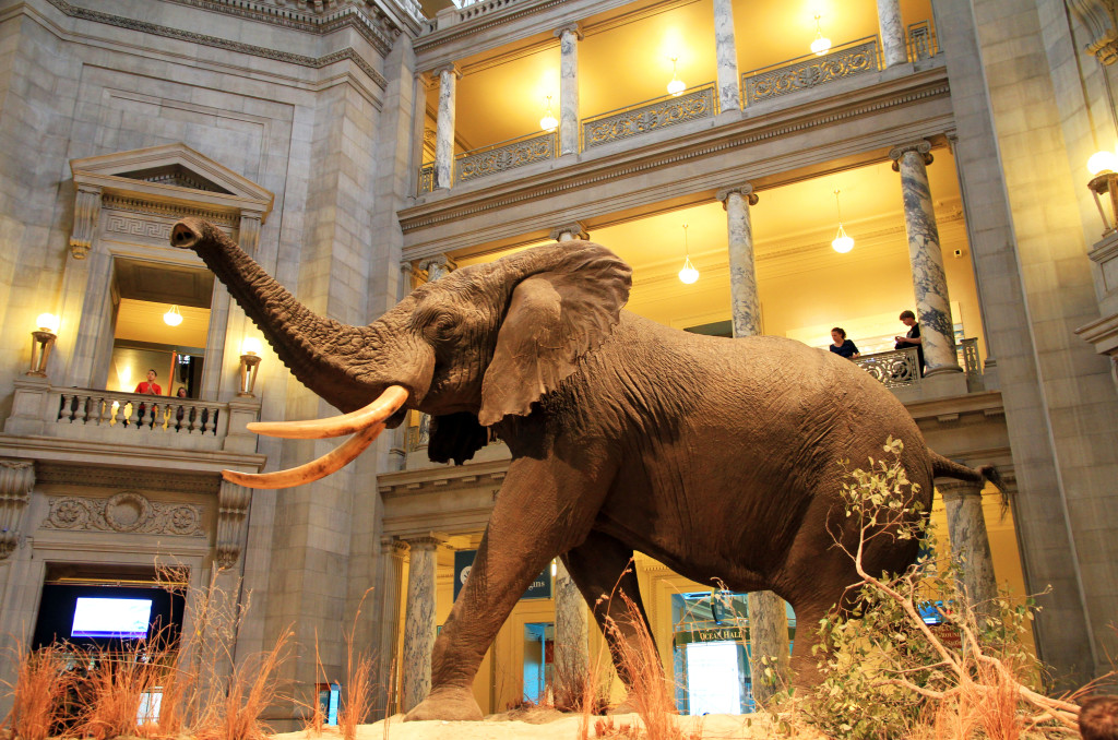 American Museum of Natural History in NYC