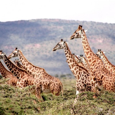 4 African Safari Experiences for Your Bucket List
